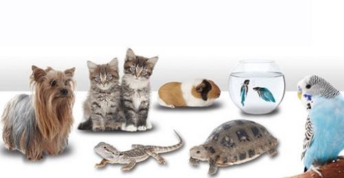 خرید محبوب ترین حیوانات خانگی