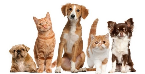 حیوانات خانگی اهلی