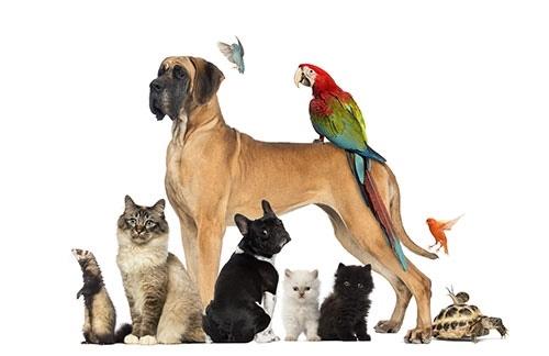محبوب ترین حیوانات خانگی جهان