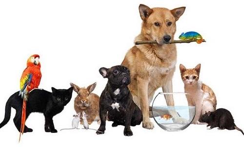 قبل از انتخاب حیوان خانگی