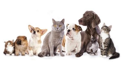 غذای محبوب ترین حیوانات خانگی