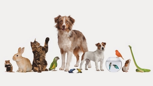 10 مورد از محبوب ترین حیوانات خانگی در جهان