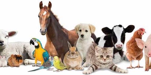 قیمت محبوب ترین حیوانات خانگی