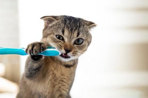 ترکیبات خمیر دندان گربه