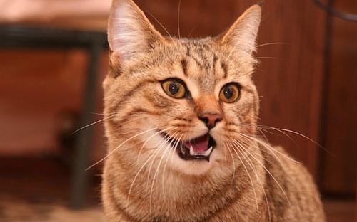 سوالات متداول درباره خمیر دندان گربه