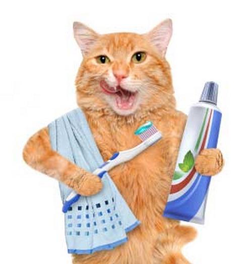 خمیر دندان مخصوص گربه