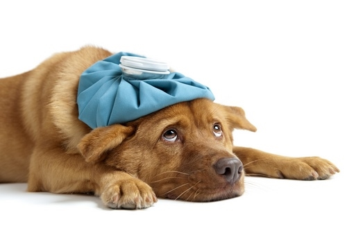 سوالات متداول درباره واکسن سگ
