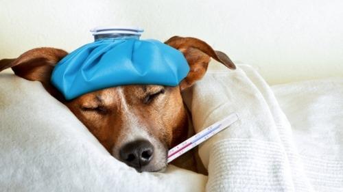 واکسن سگ