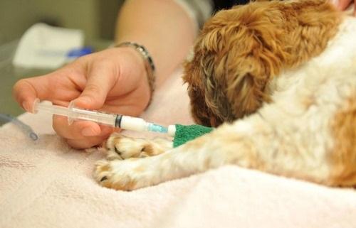 واکسن سگ را کی بزنیم