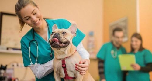 واکسن سگ ایرانی