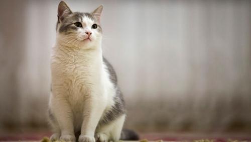ترجیح دادن افراد به نگهداری از گربه