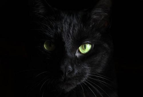 بهترین نژاد گربه جهان