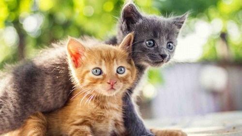 بچه ها به همراه گربه