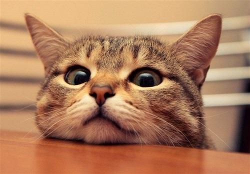 شخصیت گربه