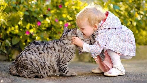 بهترین نژاد گربه برای کودکان
