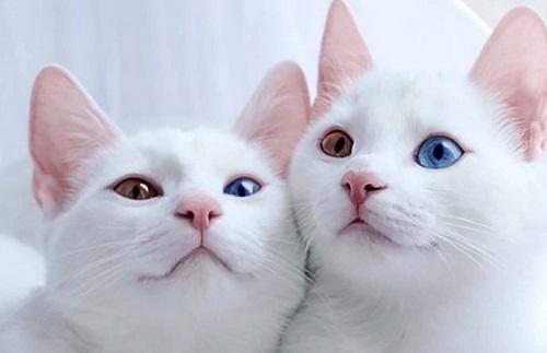سوالات متداول درباره بهترین نژاد گربه