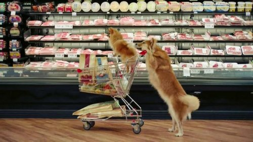 خرید از پت شاپ آنلاین به صرفه است