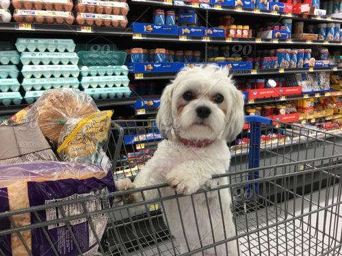 روال خرید حیوان خانگی از پت شاپ آنلاین