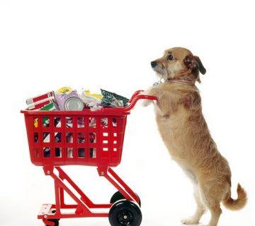 روی کار آمدن فروشگاه آنلاین برای حیوانات خانگی
