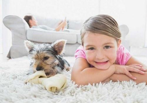 حمله سگ یورکشایر به کودکان امکان پذیر است؟