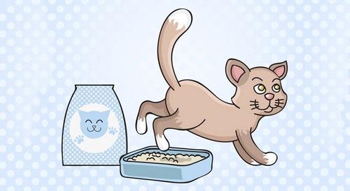 قیمت خاک گربه