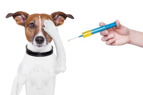 واکسن حیوانات ضروری است؟