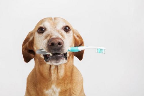 خمیر دندان بیفار سگ