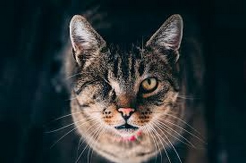 Cat eye disease