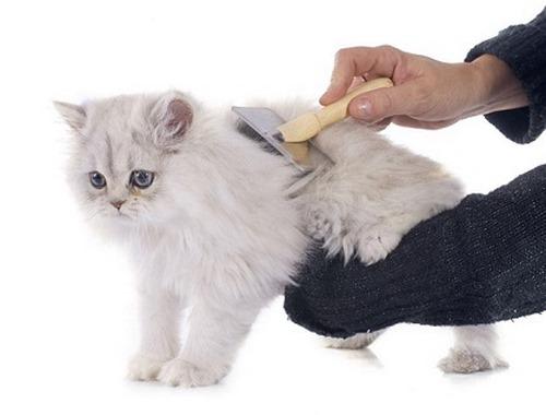 ریزش مو گربه ها