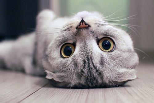 انواع بیماری چشم در گربه ها