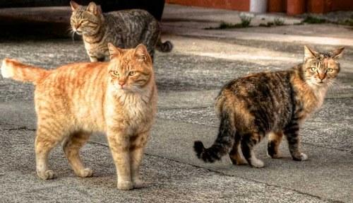 انواع بیماری گربه ها خیابانی
