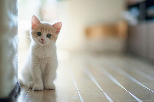 انواع بیماری گربه ها