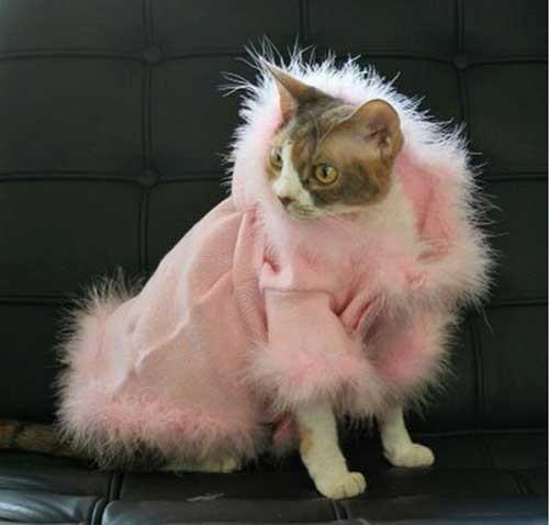 ویژگی های لباس گربه