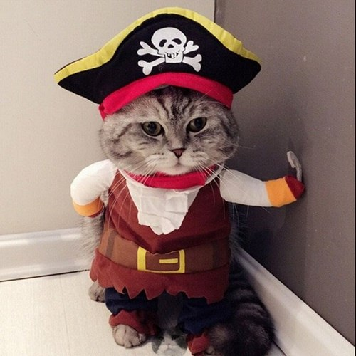 بهترین سایت برای خرید لباس گربه