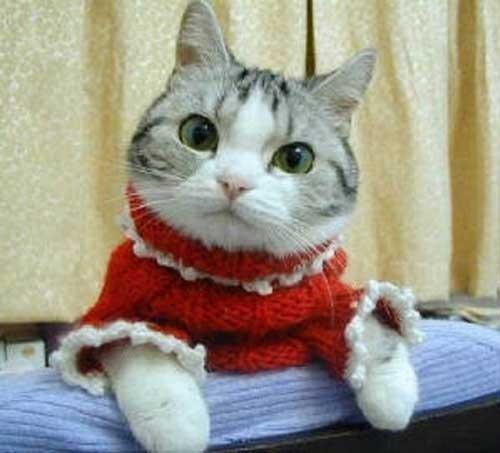 خرید لباس گربه