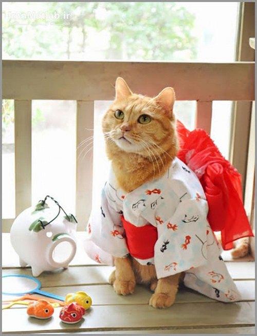 دانلود الگو برای لباس گربه