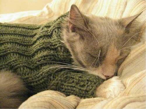 عکس های لباس گربه