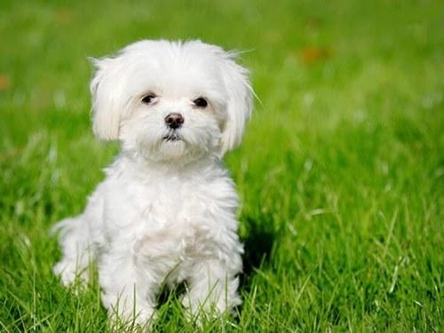 بیماری های شایع در سگ ها