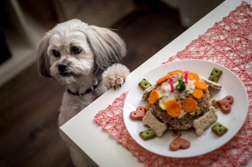 تهیه غذای سگ برای نژاد های مختلف