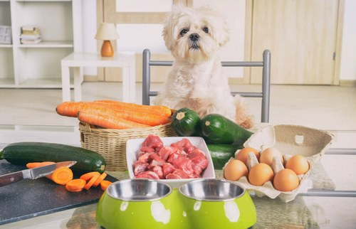 تهیه غذای سگ در خانه