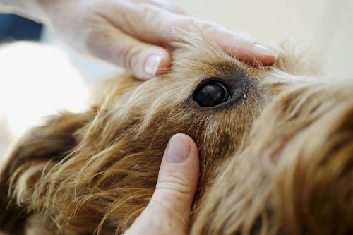 علائم بیماری سگ ها
