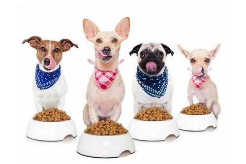 مقدار غذای سگ