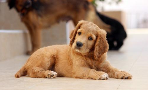 برای سگ کادو چی بخریم؟