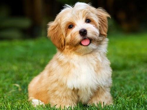 بیماری های شایع سگ ژرمن