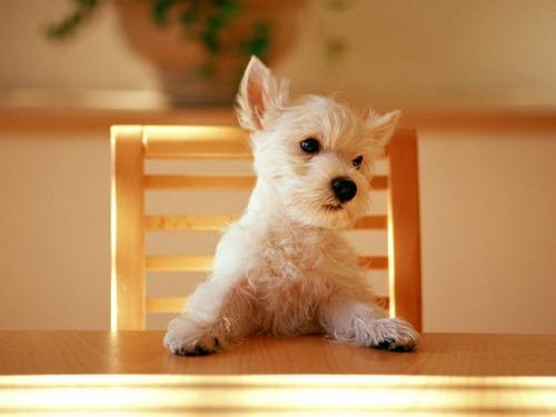 سویا برای سگ