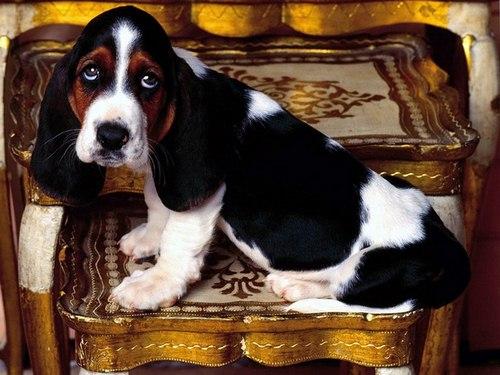 علائم مسمومیت با سویا در سگ