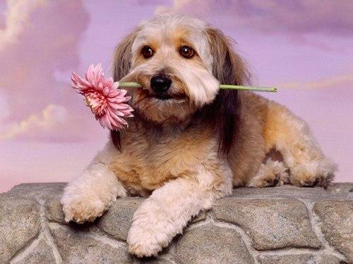 غذای ها مناسب برای مراقبت های بعد از واکسن سگ چه می باشد؟