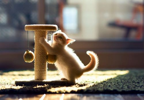اسکرچر گربه چیست؟