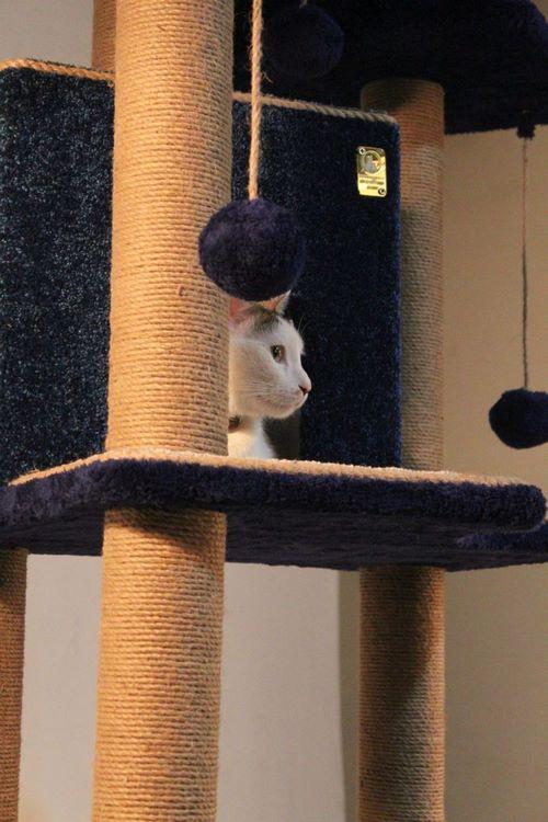 اسکرچر گربه ارزان