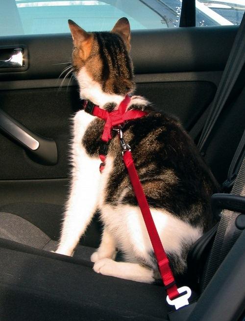 قلاده گربه ارزان